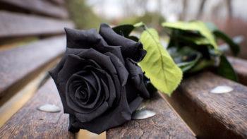 Permalink auf:Trauermusik & Trauerlieder